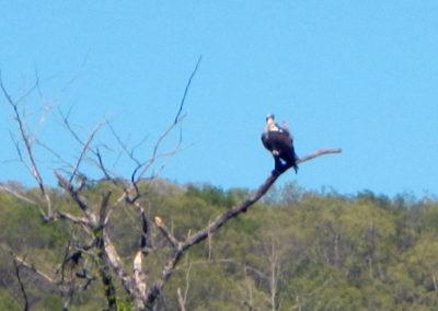 Bird watching in the Upper Buffalo River